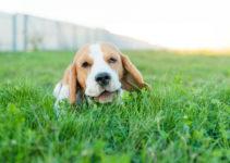 Aproveite as férias para brincar com seu pet!