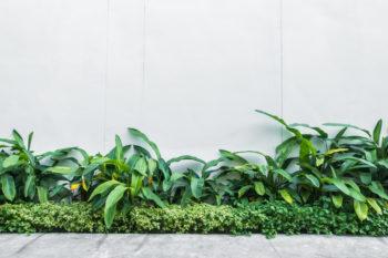 O jardim da sua casa pode preservar o meio ambiente!