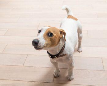 Animais de estimação em apartamento – quais os principais cuidados?